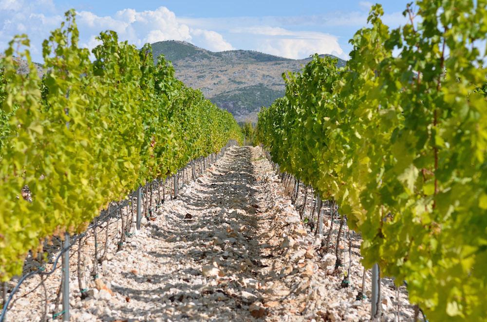 Herzegovina winery